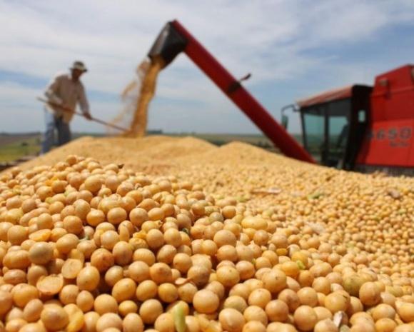 Урожай сої прогнозується на 20-23% нижче торішнього фото, ілюстрація