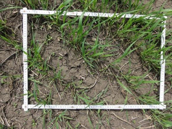 Індексне страхування для аграріїв: суть та переваги фото, ілюстрація