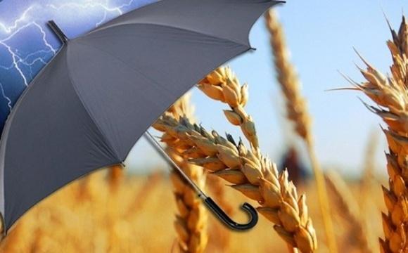 Monsanto, BASF и Syngenta включают в стоимость семян и СЗР страховку на посевы фото, иллюстрация