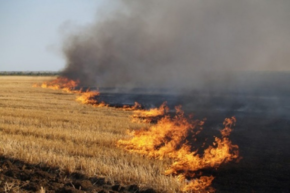 На Днепропетровщине фермер сжег соседу 43 гектара пшеницы фото, иллюстрация