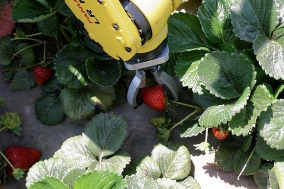 В мире активизировались исследования по роботизации сбора ягод фото, иллюстрация