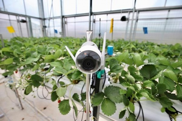 Ученые выиграли соревнования с традиционными фермерами благодаря искусственному интеллекту фото, иллюстрация
