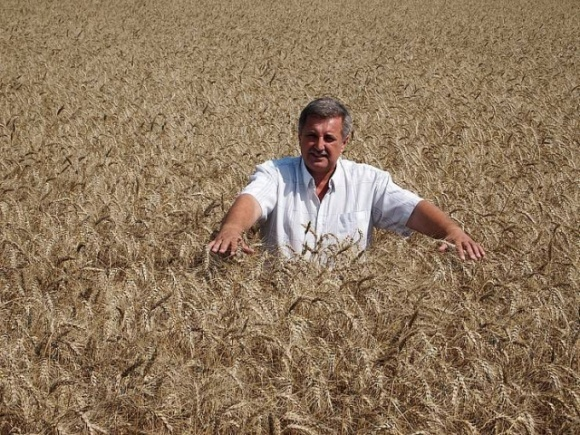 Дев'ять тонн озимої пшениці на круг цілком реально фото, ілюстрація