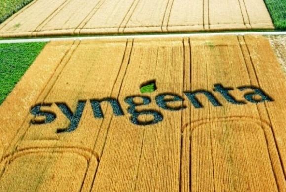 Syngenta запустила сайт з контролю бур'янів, стійких до гербіцидів фото, ілюстрація