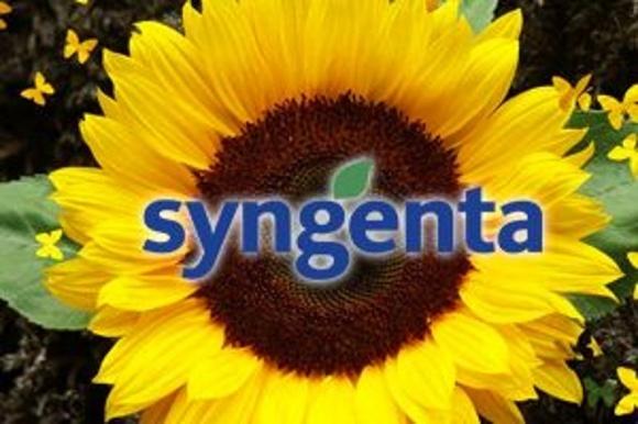 Syngenta организовала в Украине «Высокоолеиновый клуб» фото, иллюстрация