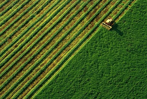 """""""ТАС Агро"""" планирует увеличить земельный банк и думает о переробке фото, иллюстрация"""