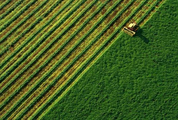 Компания «ТАС Агро» завершила сбор поздних зерновых культур фото, иллюстрация