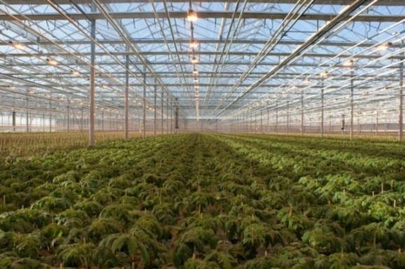 Киберпреступность угрожает современному тепличному производству в Нидерландах, — мнение фото, иллюстрация