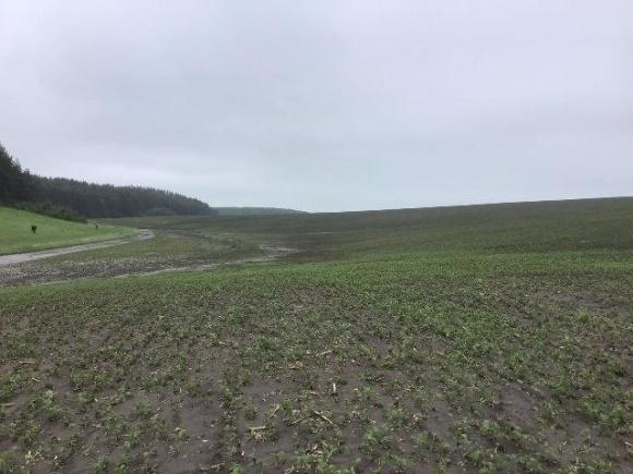После града осталась пустыня — на Тернопольщине фермеры сообщают о колоссальных убытках фото, иллюстрация