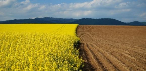 Мораторій на землю може коштувати Україні 2-75 тисяч євро на людину фото, ілюстрація