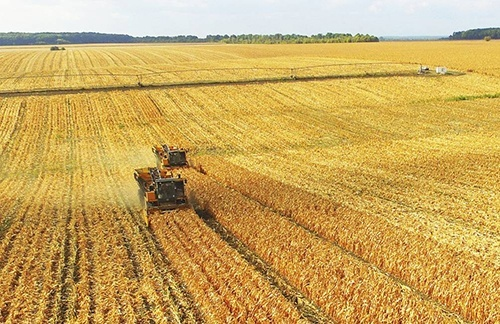 У Львівській області кукурудза обмолочена на половині прогнозованих площ фото, ілюстрація