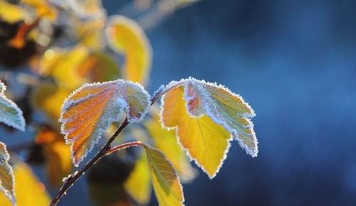 В Україні прогнозуються заморозки до -5 градусів фото, ілюстрація