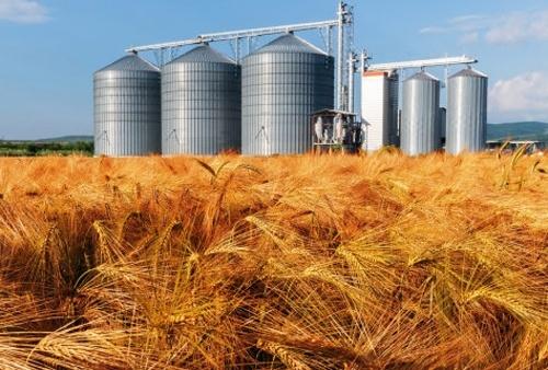 Робота ПАТ «Аграрний фонд» заблокована працівниками НАБУ фото, ілюстрація