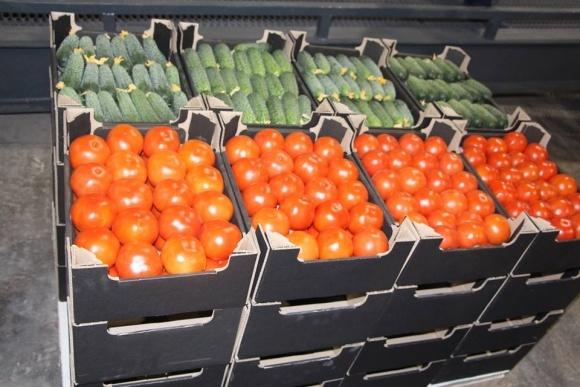 На Запорожье открыли станцию послеуборочной доработки томатов фото, иллюстрация