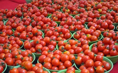 Фитосанитарные инспекторы в турецких помидорах обнаружили карантинный организм, - груз не пропустили фото, иллюстрация