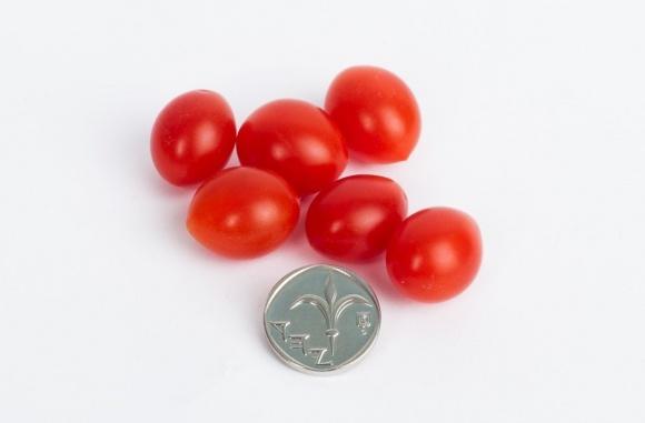 В Израиле вырастили самые маленькие помидоры в мире  фото, иллюстрация