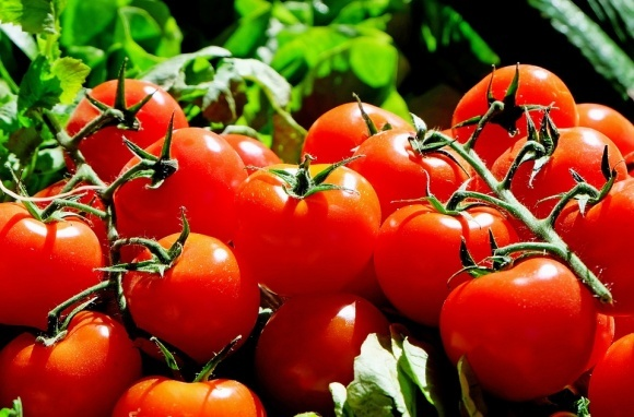 Украина сократила экспорт томатов фото, иллюстрация