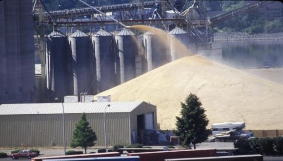 Зернотрейдеры рассказали, как на фоне колебания курса идут внутренние торги по зерновым и масличным фото, иллюстрация