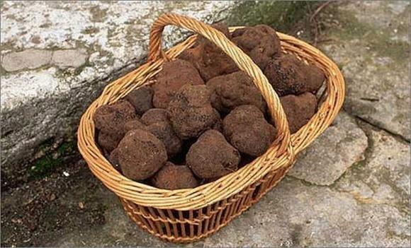 В Одесской области на плантациях фундука будут выращивать трюфели фото, иллюстрация