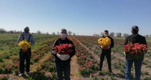 У Херсонській області фермер вирішив пожертвувати плантації тюльпанів медикам фото, ілюстрація