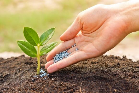 Мифы и правда о правильном внесении удобрений. Американский опыт фото, иллюстрация