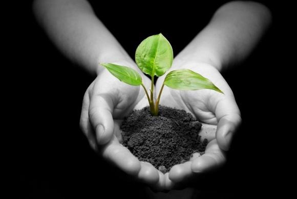 Агролайфхак: наиболее эффективная форма азота для растений фото, иллюстрация