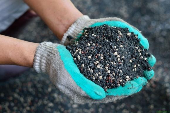 Агролайфхак: как правильно расчитать нутриенты для озимой пшеницы фото, иллюстрация