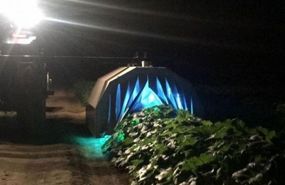 Ультрафиолетовое излучение успешно используют для фунгицидной защиты сельхозкультур фото, иллюстрация