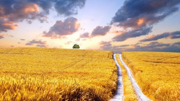 Україна посіла друге місце в Європі за площею сільськогосподарських угідь фото, ілюстрація