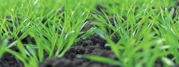 Универсальной решение для первичной защиты озимых зерновых  фото, иллюстрация