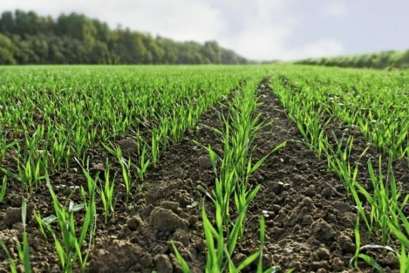 Осенний контроль сорняков в посевах озимых зерновых культур  фото, иллюстрация