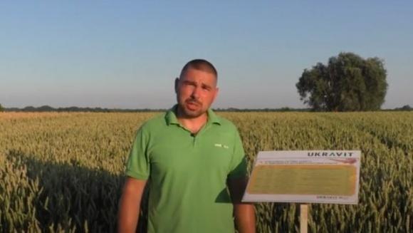 «UKRAVIT» провел День поля в онлайн-формате фото, иллюстрация