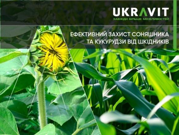 Эффективная защита подсолнечника и кукурузы от вредителей фото, иллюстрация