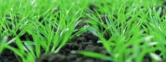 Чистое пространство для зерновых колосовых культур фото, иллюстрация