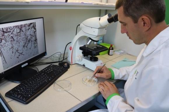 Исследуем семенной материал заранее фото, иллюстрация
