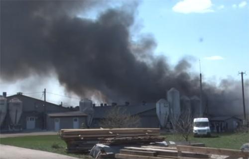 У Львівській області через пожежу загинуло півтисячі свиней фото, ілюстрація