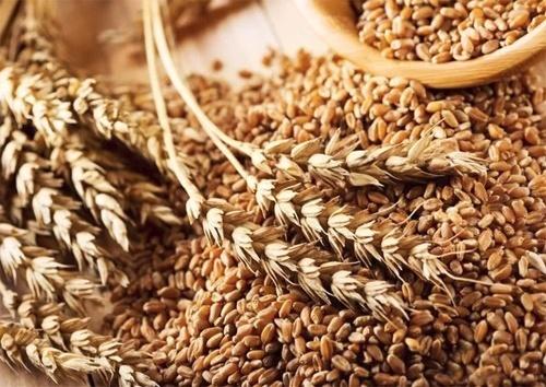 Дослідження та прогнозування глобального ринку зерна є важливою складовою для забезпечення світової продовольчої безпеки, - Олена Ковальова фото, ілюстрація