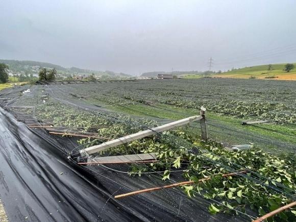 Ураганы в Швейцарии привели к уничтожению фруктовых садов фото, иллюстрация