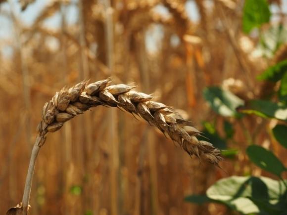 Як на Сумщині науковці допомагають аграріям збільшувати врожаї? фото, ілюстрація