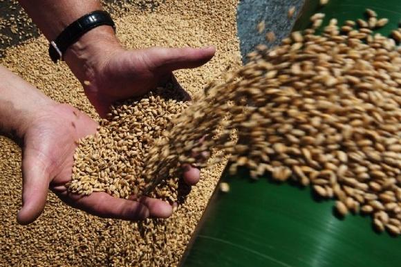 Урожайность зерновых в Казахстане может снизиться на 40% к 2050 году - прогноз фото, иллюстрация