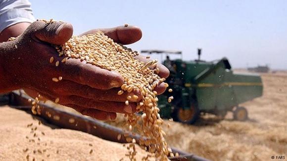 Эксперты прогнозируют уменьшение урожая зерновых на 4,5-10% фото, иллюстрация