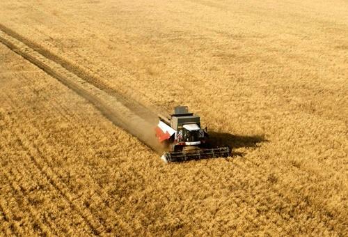 Дніпропетровщина зібрала майже 3.5 млн тон зернових фото, ілюстрація