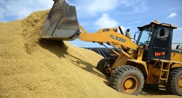 Урожай зернових цьогоріч очікується більшим, а картоплі меншим фото, ілюстрація