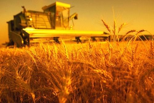 Названа самая высокоурожайная область Украины в 2018 году фото, иллюстрация