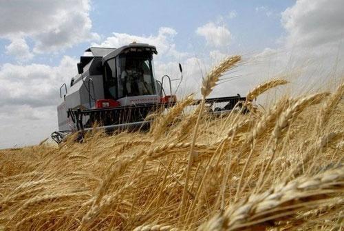 «Урожай – 2019»: Державна податкова служба Черкащини оприлюднила результати дев'ятимісячної  роботи фото, ілюстрація