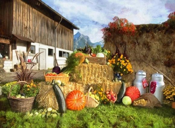 Черкаська область порадувала багатим врожаєм фото, ілюстрація