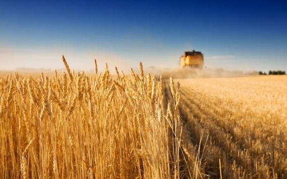 Ранних зерновых собрано с 99% засеянных площадей фото, иллюстрация