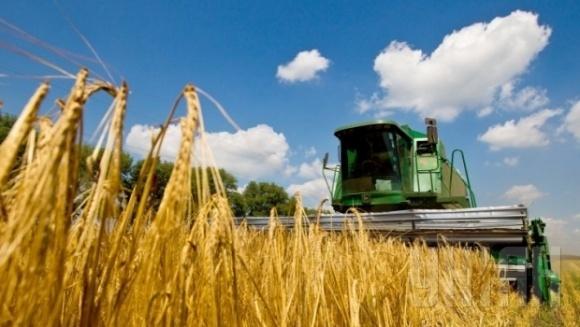В Украине намолочено более 300 тис. т зерна нового урожая фото, иллюстрация