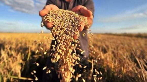 ЄС очікує зниження врожайності зернових та олійних культур фото, ілюстрація