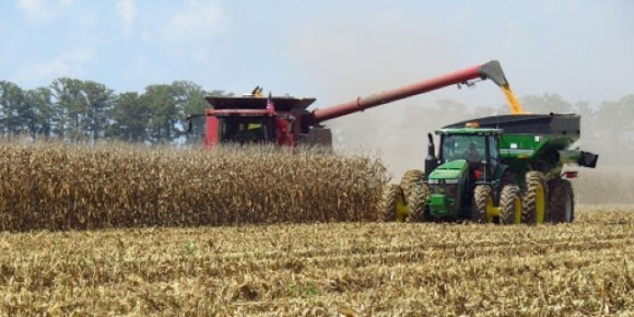 ИМК завершила уборку кукурузы со средней урожайностью, которая почти на 80% превышает показатели по Украине фото, иллюстрация
